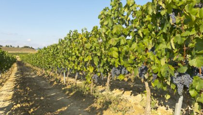 Kick-off SECBIVIT: vineyards produce more than wine
