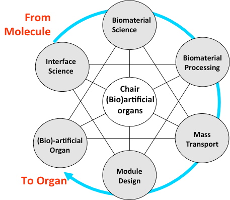 Research | (Bio)Artificial Organs | BST